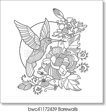 Hummingbird coloring book for adults vector art print poster