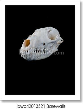 Fox Skull Art Print Barewalls Posters Prints Bwc42013321 Free for commercial use no attribution required high quality images. barewalls