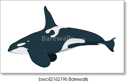 Killwhale, Orca whale icon isolated on white background cartoon realistic whale art print poster
