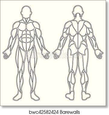 Art Print of Human body muscles silhouette | Barewalls Posters ...