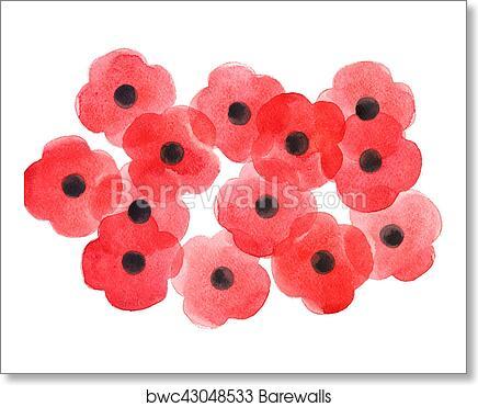 Watercolor Poppy Flower Remembrance Day White Background Art Print Barewalls Posters Prints Bwc43048533