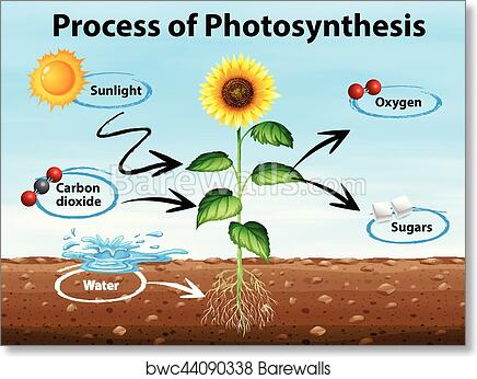 Photosynthesis process diagram labeled auto electrical wiring art print of diagram showing process of photosynthesis barewalls rh barewalls com blank photosynthesis diagram label photosynthesis worksheet grade 3 ccuart Images