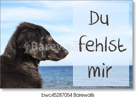 fehlst