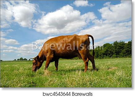 Cows eating grass HD Canvas printed Home decor painting Wall art picture poster