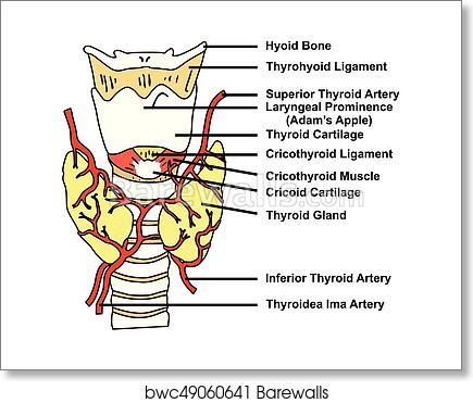 structure of arteries