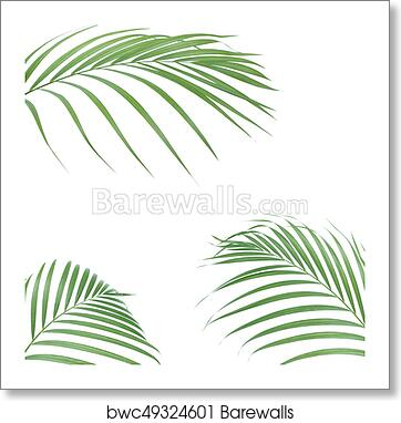 Tropical Palm Leaves On White Background Minimal Nature Summer Styled Flat Lay Image Is Approximately 5000 X 5000 Pixels In Size Art Print Barewalls Posters Prints Bwc49324601 Green tropical palm leaf, monster flowers. tropical palm leaves on white background minimal nature summer styled flat lay image is approximately 5000 x 5000 pixels in size art print poster