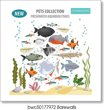 Freshwater Aquarium Fishes Breeds Icon Set Flat Style Isolated On White Characins Create Own Infographic About Pets Art Print Barewalls Posters Prints Bwc50177972