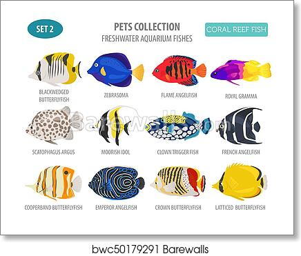 Art Print Of Freshwater Aquarium Fish Breeds Icon Set Flat Style Isolated On White Coral Reef Create Own Infographic About Pet