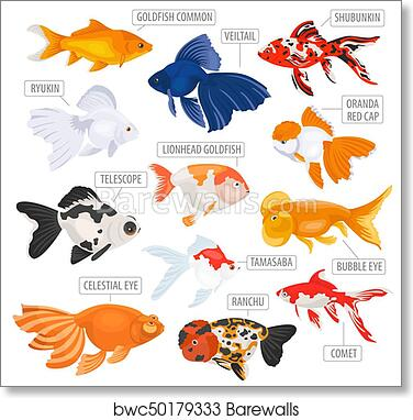 Decorations Fresh Water Fishs Poster For The Home Colourful Wall Chart Aquarium Fish Posters Pet Supplies
