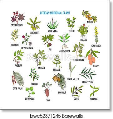 African Medicinal Plants Art Print Barewalls Posters Prints Bwc52371245