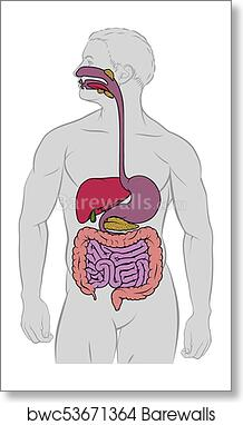 Art print of gastrointestinal digestive tract anatomy diagram art print of gastrointestinal digestive tract anatomy diagram ccuart Image collections