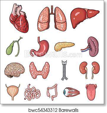 Art Print Of Human Organs Cartoon Icons In Set Collection For Design