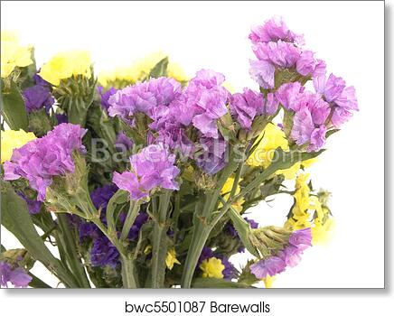 Art print of statice flowers limonium sinuatum barewalls posters art print of statice flowers limonium sinuatum mightylinksfo