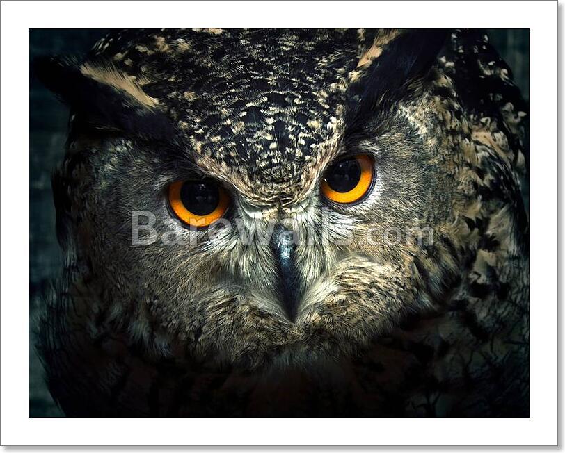 Owl Close Up. Art Print / Canvas Print. Poster, Wall Art ...