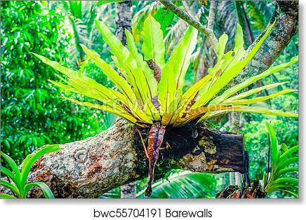 Waterfall 24x36 Rainforest Art Poster Print Tropical Forest Green Vibrant life