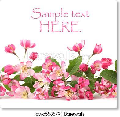 Pink Spring Flower Border Art Print Barewalls Posters Prints