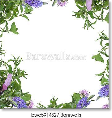 Herb Flower Border Art Print Barewalls Posters Prints Bwc5914327
