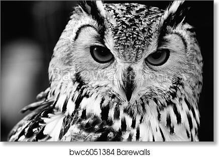 Art print of close up portrait of eurasian eagle owl