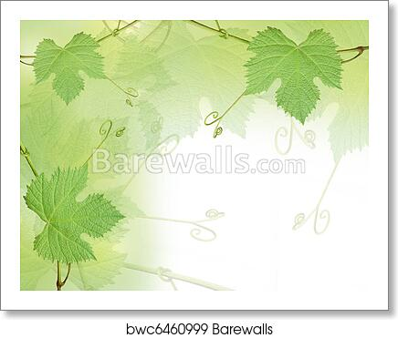 Green Grape Leaves Background Art Print Barewalls Posters Prints Bwc6460999