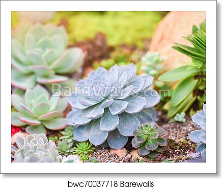 Succulent Plant Various Types Beautiful Growing In The Garden Art