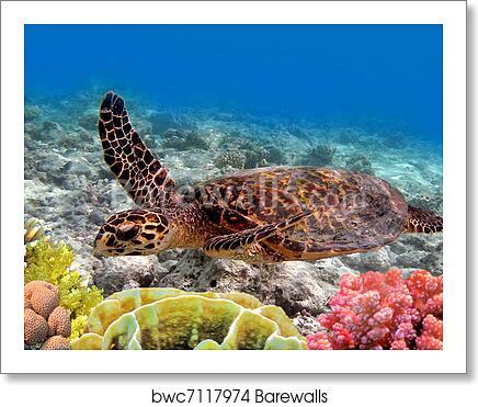 Green Sea Turtle Swimming In Art Print Canvas