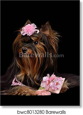 Art Print Of Glamour Yorkie Dog With Pink Items Barewalls Posters