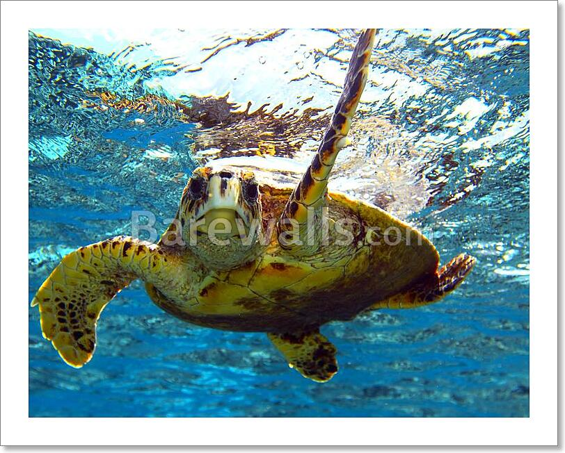 Details About Sea Turtle Art Print Canvas Home Decor Wall Poster D