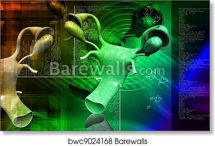 Art Print of Overies and uterus | Barewalls Posters & Prints ...