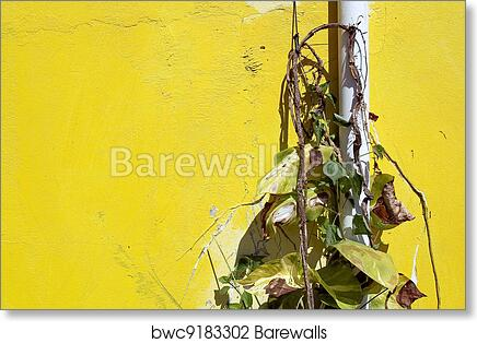 Art Print of Dried weed on the yellow wall | Barewalls Posters ...