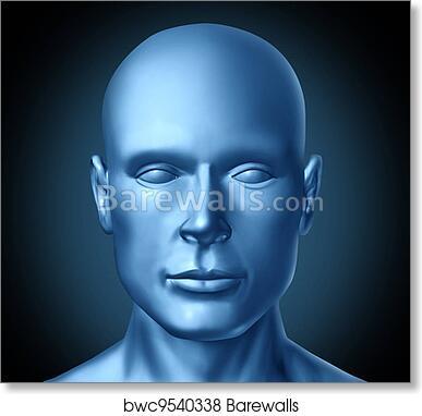 Art Print Of Human Head Frontal View Barewalls Posters Prints