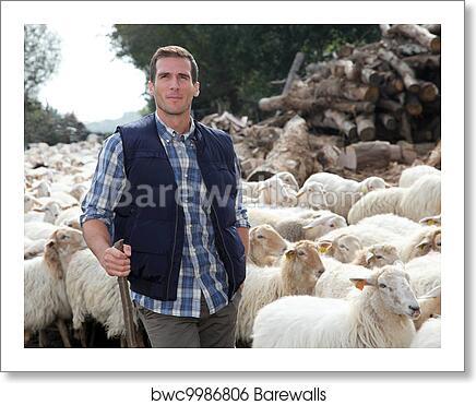 Shepherd standing by sheep in meadow art print poster