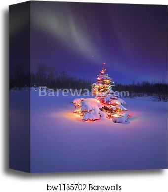 canvas print of christmas tree glowing under the northern lights by carson ganci