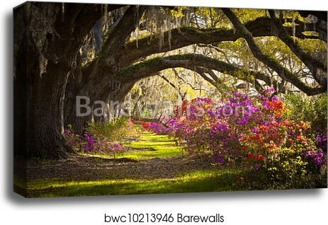 Charleston SC Road Forest Trees 3.2 Wall Art Canvas Picture Print