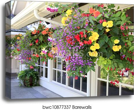 Many hanging baskets with flowers outside of house windows. canvas print