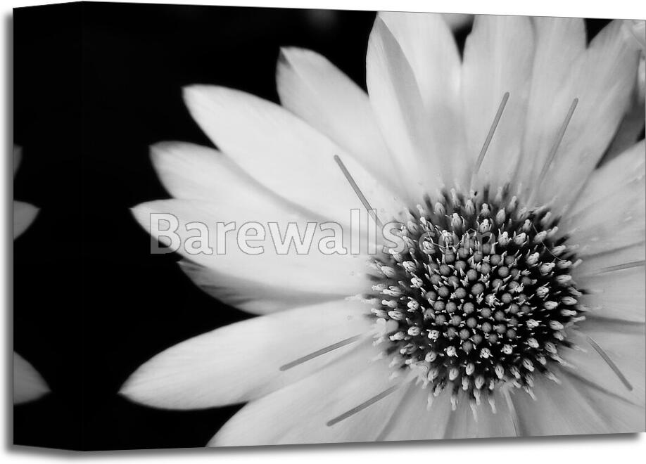Black and white flower art printcanvas home decor wall art poster black and white flower art print canvas home mightylinksfo