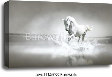 Canvas Print Of White Horse Running Through Water Barewalls