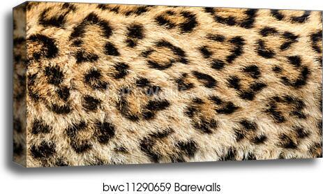 """24/""""x24/"""" Leopard Fur// Skin Texture Canvas Prints Wall Art"""