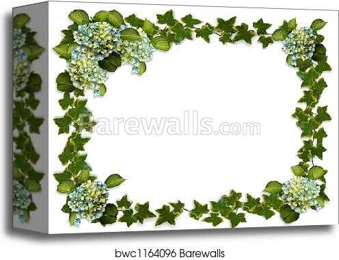 canvas print of hydrangea and ivy border barewalls posters