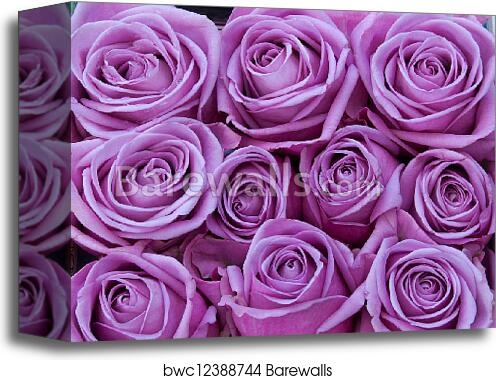 Canvas Print Of Purple Roses