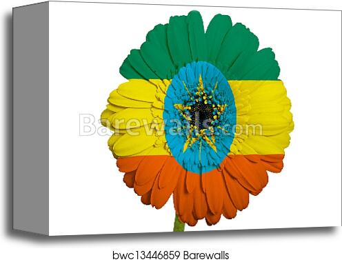 Canvas print of gerbera daisy flower in colors national flag of canvas print of gerbera daisy flower in colors national flag of ethiopia on white background as concept and symbol of love beauty innocence and positive mightylinksfo