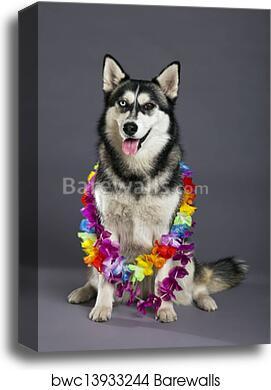 siberian husky print dog sledding gift husky gift husky art funny home decor funny animal husky poster Husky Portrait Tropical husky