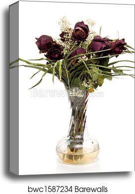 Canvas Print Of Dead Roses Barewalls Posters Prints Bwc1587234
