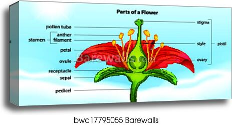 Canvas Print of Parts of a flower | Barewalls Posters & Prints ...