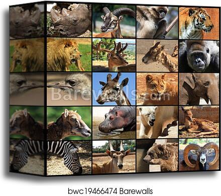 Canvas Print Of Animals Collage