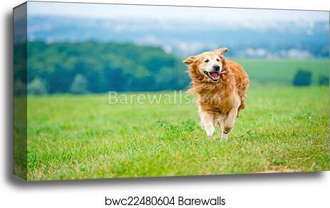 BEAUTIFUL GOLDEN RETRIEVER DOG JUMPING CANVAS PRINT WALL ART PICTURE PHOTO