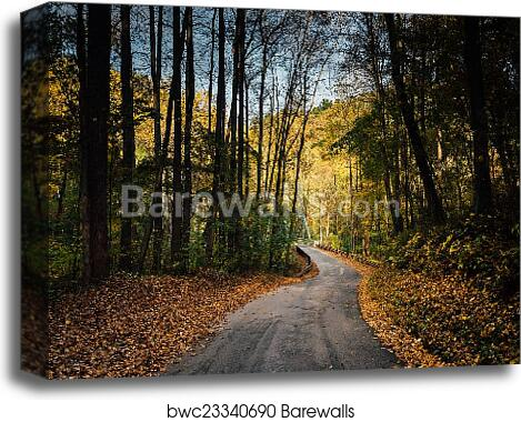 Early autumn color on a road in rural Baltimore County, Maryland canvas  print