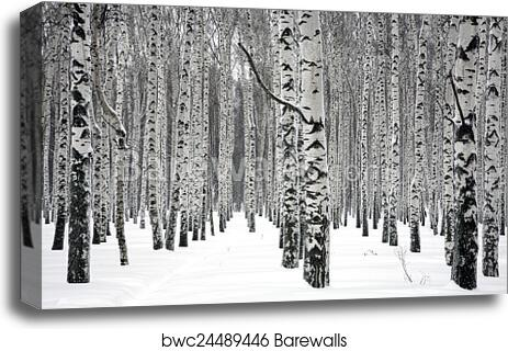 Winter Trees in Fog Landscape 3.2 Wall Art Canvas Picture Print