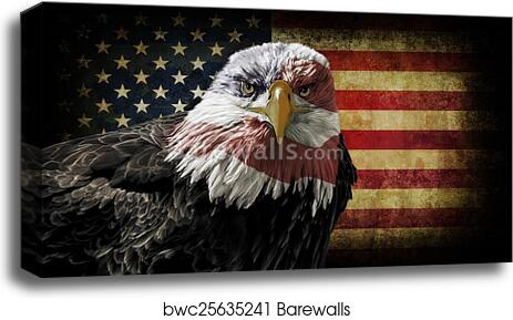 Art print POSTER CANVAS Bald Eagle in Nest