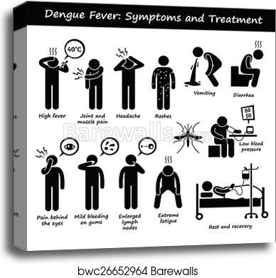 Dengue Fever Infects La Fte De >> Dengue Aedes Symptoms And Treatment Canvas Print Barewalls