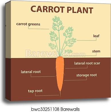 Plant Parts Diagram Without Labels Wiring Diagram Services